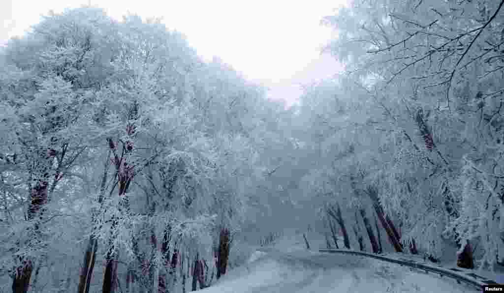 تصویری از درختان پوشیده از برف در گرجستان