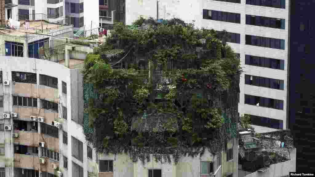 중국 광동성 광저우시 19층짜리 주택 옥상에 불법 건축을 가리기 위한 나무가 무성하게 자라있다.