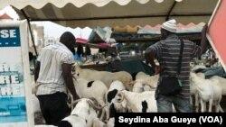 Les éleveurs au milieu de leur troupeau à Dakar, Sénégal, le 10 août 2019. (VOA/Seydina Aba Gueye)