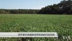 海平面升高威胁世界各地的内陆农田