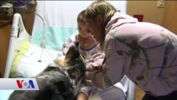 Terapi Köpeklerinin Yararları