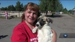 Чорнобильським собакам знайшли притулок у США. Відео