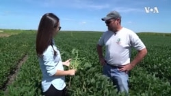 美国农民: 我为什么支持贸易战(上)