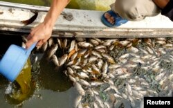 An environmentalist checks the quality of the water near dead fishes along the Ngoc Khanh lake in Hanoi April 25, 2011.