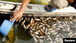 Những tháng gần đây xảy ra tình trạng cá chết hàng loạt ở nhiều tỉnh thành ở Việt Nam, sau sự cố cá chết ở biển 4 tỉnh miền Trung Việt Nam.