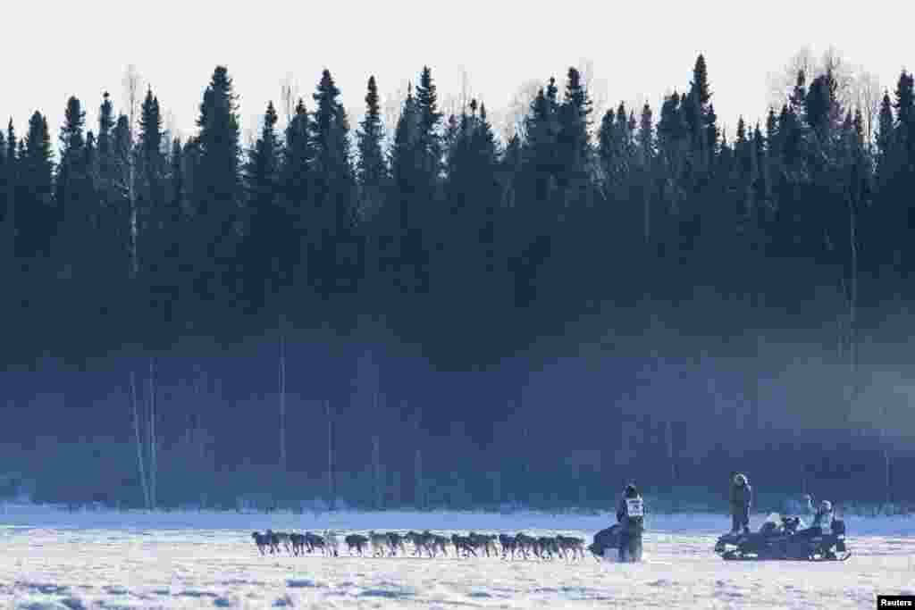 Sonny Lindner's team heads into the woods after all the other teams during the official restart of the Iditarod dog sled race in Willow, Alaska, March 2, 2014.