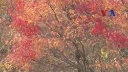 Keindahan Pemandangan Musim Gugur