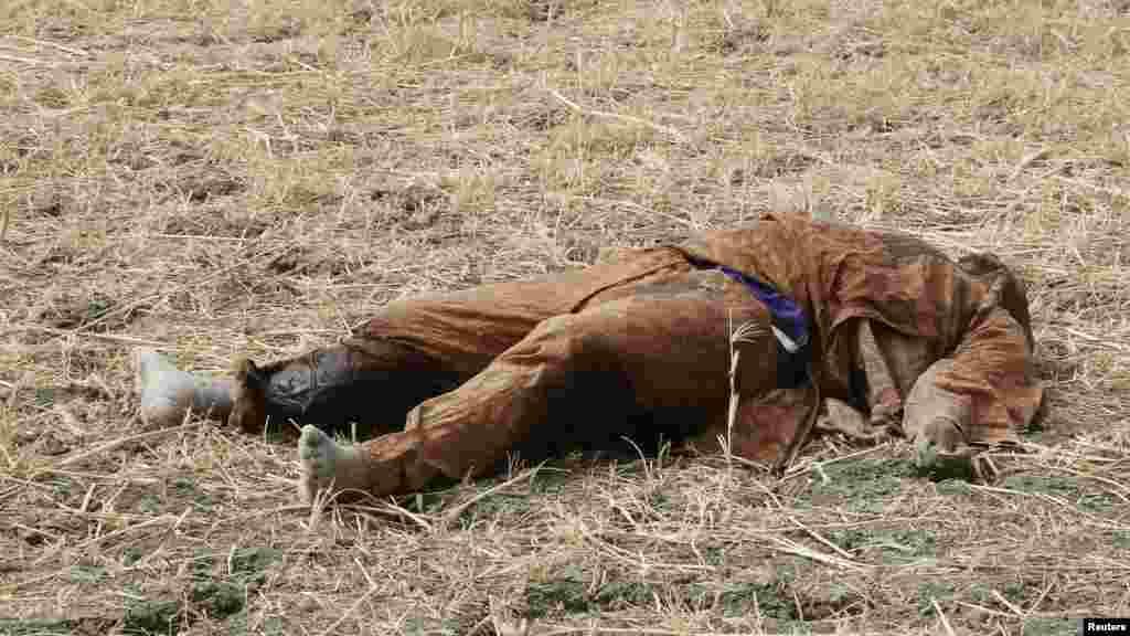 Le corps d'un homme, qu'on croit être un combattant Boko Haram et qui a été tué par l'armée tchadienne pendant la bataille, git dans un champ à Gambaru, le 26 février 2015.