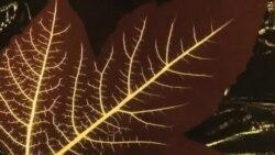 Врската меѓу функцијата и геометриската структура во живата природа