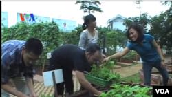 Kegiatan memanfaatkan lahan pertanian di salah satu sudut ibukota Jakarta (Foto: VOA/Screengrab video)
