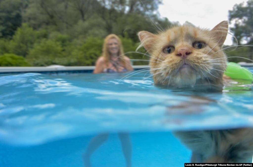 تیسی عاشق شنا کردن در استخر است