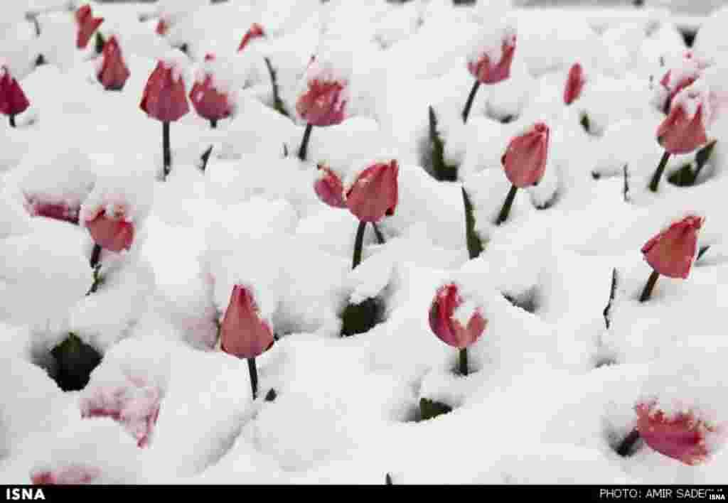 بارش برف در تبریز .... عکس : امیر صادقی، ایسنا