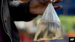 FILE - A person shows off small fish in a plastic bag in Nairobi, Kenya, June 1, 2016.