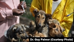 Dogs in a bicycle basket about to get their rabies vaccination in Tanzania at a clinic run by Dr. Guy Palmer.