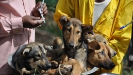 Dogs in a bicycle basket await their rabies vaccinations in Tanzania.
