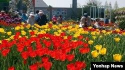24일 한국 고양시 일산호수공원 15만㎡에 고양국제꽃박람회가 개막, 관람객들이 형형색색 꽃으로 장식된 야외정원을 둘러보고 있다.