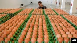 A man transports eggs at a processing plant in Gaesti, southern Romania, Friday, Aug. 11, 2017. (AP Photo/Vadim Ghirda)