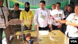 Penangkapan seorang tersangka penjual satwa dilindungi melalui media sosial (baju kuning), di Deli Serdang, Sumatera Utara, Rabu (12/9). (Foto: VOA/Anugrah)