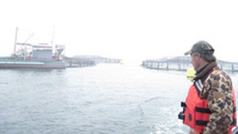 Federal Permit Process Stalls Open Ocean Fish Farming Projects