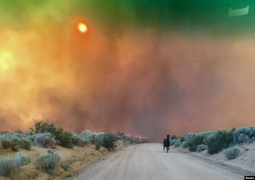 美国加州 Doyle 的长谷,野火燃烧,奔马逃跑(2017年7月13日)。