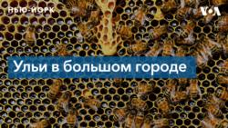 Как найти с пчелами Нью-Йорка общий язык?