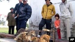 Dân trong một làng ở Nghệ An nhìn chiếc chuồng chó các tên trộm chó bỏ lại