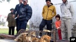 Dân làng bên cạnh một cái lồng với những con chó bị những tên trộm chó bỏ lại ở Nghệ An. Nạn trộm chó đang xảy ra ở nhiều nơi tại Việt Nam, gây ra nhiều bức xúc trong xã hội, nhất là tại vùng nông thôn.