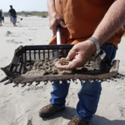 An Inspector displays oiled sand in a sifter as a cleanup crew works on Fourchon Beach in Port Fourchon, La