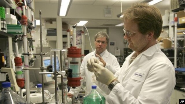 Protein galectin-3 bekerjasama dengan sistem kekebalan tubuh untuk memperbaiki jaringan, tetapi kalau terlalu banyak, protein itu dapat menyebabkan peradangan berbahaya yang terkait dengan penyakit jantung, kanker dan penyakit ginjal (foto: Dok.).