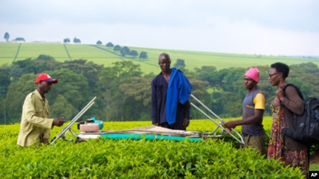 With climate data from Kenya's Kericho Tea Estates, IRI epidemiologist Judy Omumbo (right) confirmed that the region has been warming.