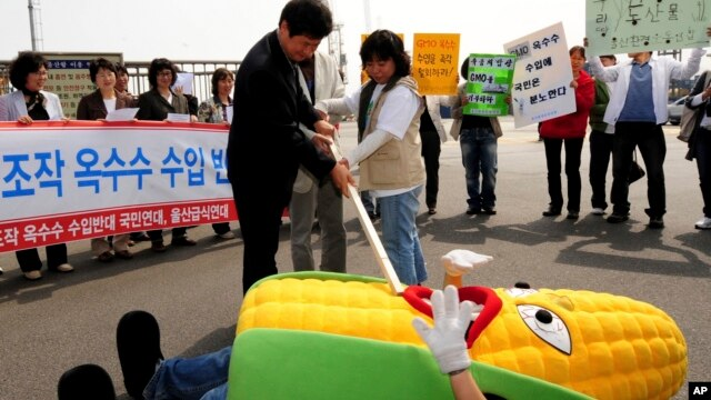 FILE - South Korean civic group members perform during rally against imported genetically modified organism (GMO) corn from China, Ulsan, South Korea, May 1, 2008.