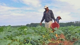 Most of the one million farm workers in the U.S. are immigrants, up to a half are thought to be in the U.S. illegally.