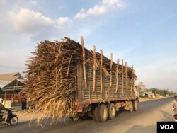 A truck transports sugarcanes to Phnom Penh Sugar factory for refinery, in Kampong Speu province's Aoral district, on March 5, 2020. (Sun Narin/VOA Khmer)