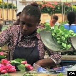 Kenija je na izvozu cvijeća gubila i do 3 miliona dolara dnevno