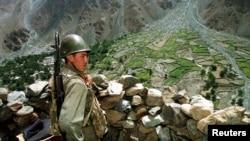کشتزار کوکنار در افغانستان در امتداد مرز با تاجکستان