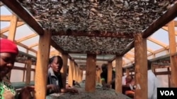 Fishers in Malawi use a solar tent to dry their daily catch. (Source: VOA)