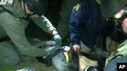 지난 19일 보스턴 테러 용의자 조하르 차르나예프를 생포하는 미 수사당국 FBI 요원들.