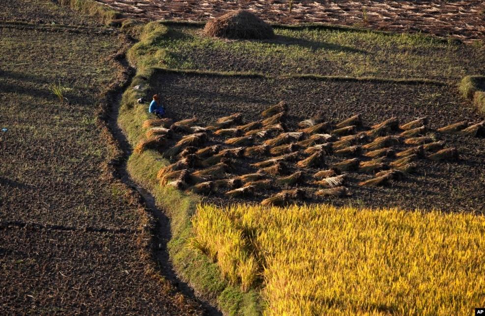 Nepal tarlaları