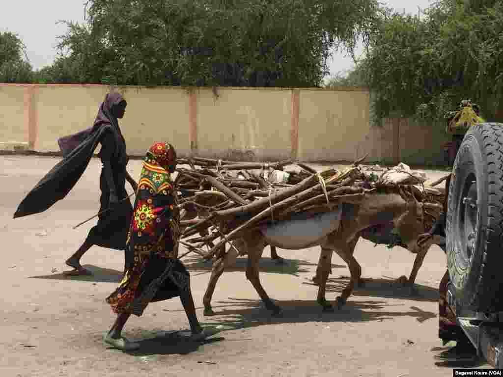 Des paysannes marchent avec leurs bagages sur des dos d'âne, Chad, Bol, Chad, April 1, 2016, Photo VOA Bagassi Koura