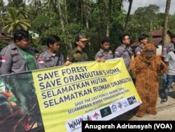 Aliansi Selamatkan Hutan Batang Toru saat melakukan aksi kampanye penyelamatan ekosistem Batang Toru dan Orangutan Tapanuli di Desa Panobasan, Kecamatan Angkola Barat, Kabupaten Tapanuli Selatan, Kamis (22/2). (FOTO: VOA/Anugrah Andriansyah)