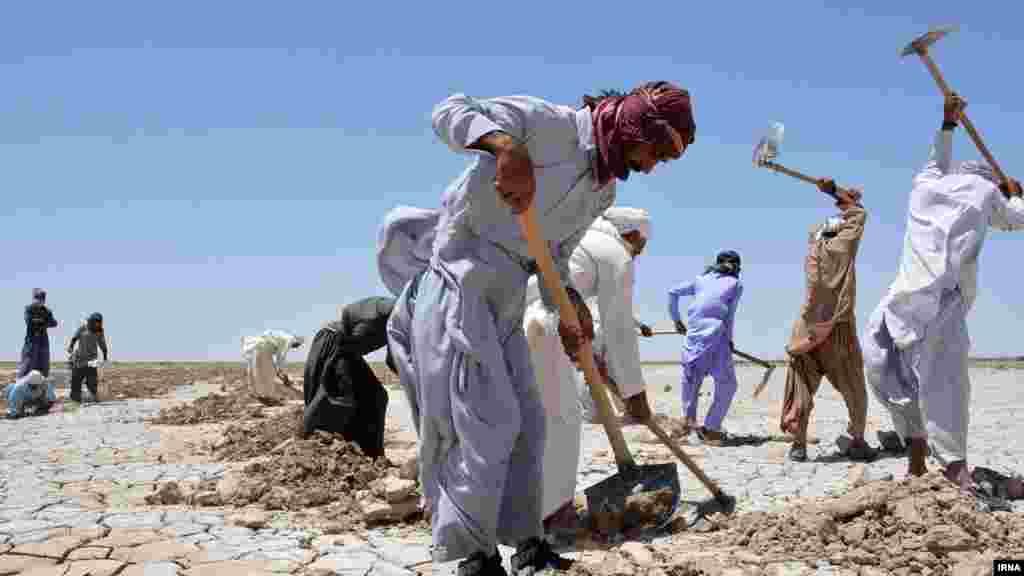 کشت خربزه در تالاب هامون - عکس: حامد غلامی، ایرنا
