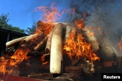 Flames rise from confiscated pieces of ivory as they are burned along with illegal wildlife parts by Myanmar's Ministry of Natural Resources and Environmental Conservation in Naypyidaw, Myanmar, Oct. 4, 2018.