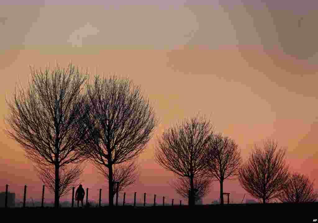 Seorang perempuan berjalan di antara pepohonan pada saat matahari terbit di Frankfurt, Jerman.