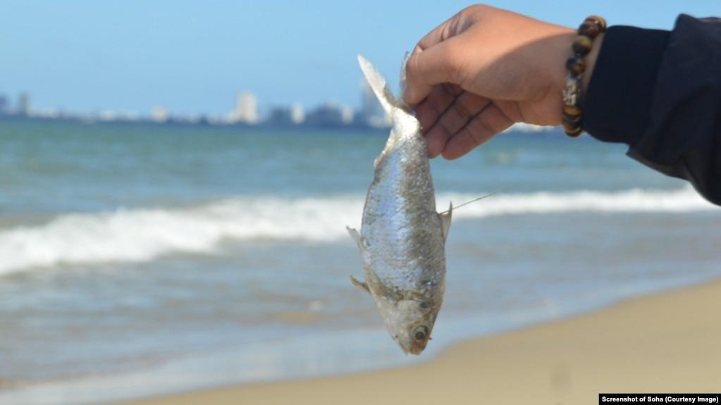 Chính quyền Đà Nẵng cho biết kết quả quan trắc nước biển không có dấu hiệu bất thường sau khi 2 tấn cá chết dạt bờ.