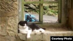 گربه ها بیش از پنج هزار سال پیش به دست انسان اهلی شدند و به خانه های مردم راه پیدا کردند.