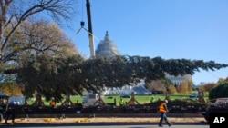 El Árbol de Navidad del Capitolio llegó a Washington el viernes, 20 de noviembre de 2015, desde el Parque Nacional Chugach, en Alaska.