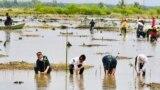 Presiden Jokowi (ketiga dari kiri) bersama para Duta Besar negara sahabat melakukan penanaman kembali mangrove di Desa Bebatu, Kalimantan Utara, pada 19 Oktober 2021. Jokowi memasang target untuk merehabilitasi sebanyak 600 hektare lahan mangrove. (Foto: Biro Setpres)