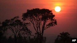 Cây cối trong khu bảo tồn Cerrado ở Brazil, một trong những hệ sinh thái nhiệt đới đa dạng nhất và cổ xưa nhất trái đất