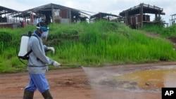 지난 1일 라이베리아 몬로비아에서 에볼라 감염 사례가 추가 발생한 후 보건 관계자가 길거리에 소독제를 뿌리고 있다. (자료사진)