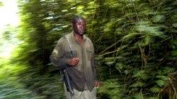 Le chômage et la déforestation, deux problèmes majeurs dans beaucoup de pays africains